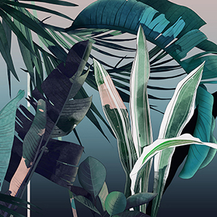 1_Illustration_Tropical_pi