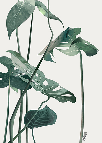Leaves_Monstera3_lr